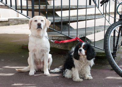 humour & photographie : les chiens