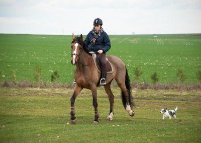 humour & photographie : chien et cheval